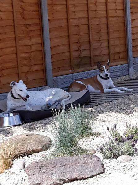 Dogs enjoying the shade