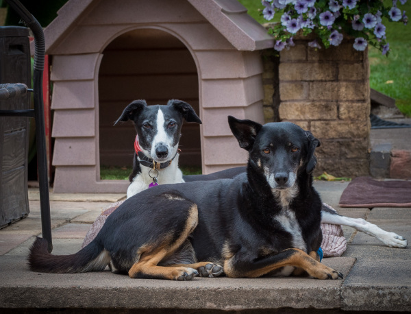 Two dogs in front of kennel