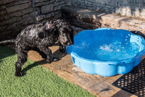 Dog in paddling pool